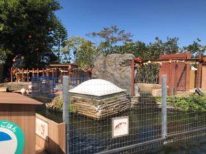 八景島シーパラダイス フラミンゴコーナー