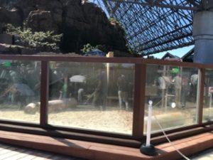 八景島シーパラダイス カワウソコーナー