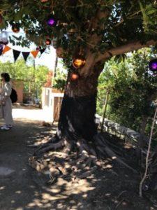 八景島シーパラダイス 水族館内 ハロウィン デコレーション