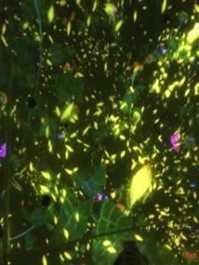 チームラボ プラネッツ 豊洲 花