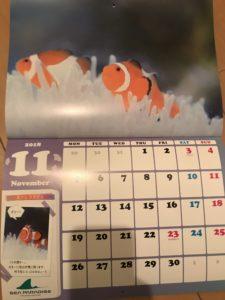 シーパラ 年パス もらえる カレンダー