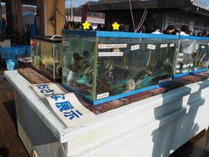 おさかな水槽展示 柴漁港