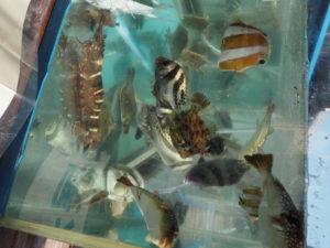 おさかな水槽の中 柴漁港