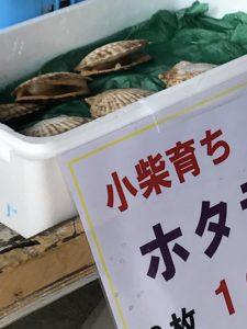 金沢漁港 ホタテ販売