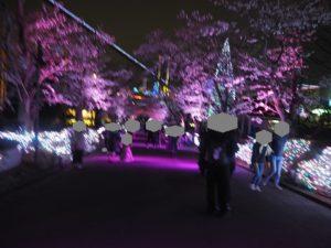 よみうりランド 聖地公園入口 桜並木