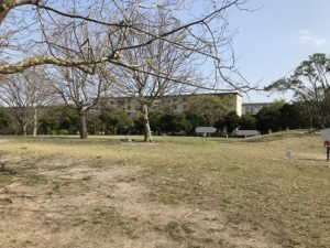 室の木公園 横浜 広場
